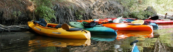Bold Paths Kayaks Shore
