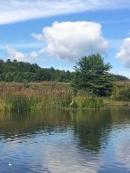 heron omp river